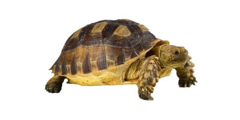 Turtle exit